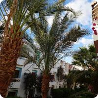 Hurghada – Turisták és oldalak